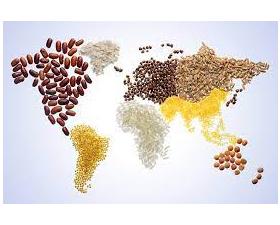 Nông nghiệp Việt Nam có vai trò quan trọng trong hệ thống lương thực, thực phẩm toàn cầu 2021